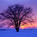 winterincountry