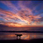 dog heaven Art