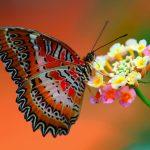 3butterfly_on_flower-1920x1080